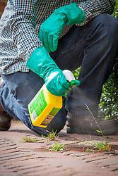 Spraying weeds between cracks on a brick path