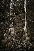 Fallen Trees, Industrial Woodland, Northwich