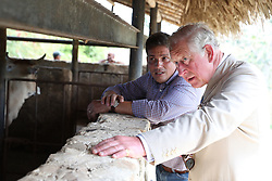 The Prince of Wales views cattle during a visit to the Finca Marta organic farm in the Caimito district, near Havana, Cuba, as part of an historic trip which celebrates cultural ties between the UK and the Communist state.