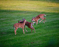 Cousins running to mother. Image taken with a Fuji X-T3 camera and 200 mm f/2 lens