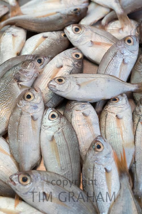 Fresh fish on display for sale on market stall at old street market - Mercado -  in Ortigia, Syracuse, Sicily