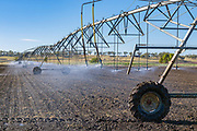 Mobile lateral move irrigation boom system in field of new vegetable crop near Warwick, Queensland, Australia. <br />