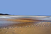 Paw Prints on Secluded Beach - Tasmania