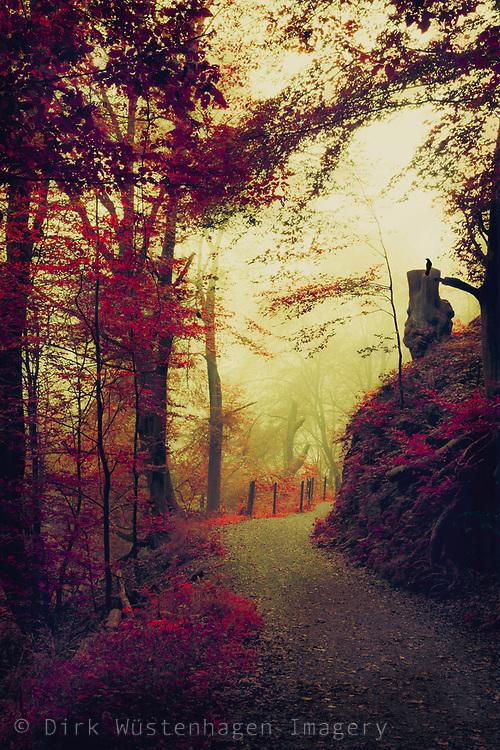Hike through mystical foggy forest - photomanipulation
