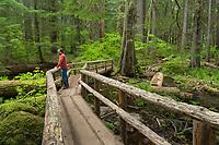 Wooden bridge on the Tamoitch Falls Trail, Cascade Range Oregon