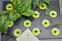 AeroGarden Farm 03 Left Tray at 23 days. L01-L03 Broccoli; L04-06 Swiss Chard; L07-L09 Basil; L10 Dill; L11-12 Parsley. Image taken with a Leica TL-2 camera and 35 mm f/1.4 lens (ISO 800, 35 mm, f/11, 1/50 sec).