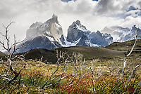 The Cuernos del Paine framed by dead trees - Torres del Paine, Chile.