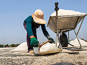 "28 MARCH 2014 - NA KHOK, SAMUT SAKHON, THAILAND: Workers collect salt in an evaporation pond in Samut Sakhon province. Thai salt farmers south of Bangkok are experiencing a better than usual year this year because of the drought gripping Thailand. Some salt farmers say they could get an extra month of salt collection out of their fields because it has rained so little through the current dry season. Salt is normally collected from late February through May. Fields are flooded with sea water and salt is collected as the water evaporates. Last year, the salt season was shortened by more than a month because of unseasonable rains. The Thai government has warned farmers and consumers that 2014 may be a record dry year because an expected ""El Nino"" weather pattern will block rain in mainland Southeast Asia. Salt has traditionally been harvested in tidal basins along the coast southwest of Bangkok but industrial development in the area has reduced the amount of land available for commercial salt production and now salt is mainly harvested in a small parts of Samut Songkhram and Samut Sakhon provinces.    PHOTO BY JACK KURTZ"