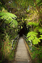 Thurston Lava Tube or Nahuku entrance, Hawaii, USA Volcanoes National Park, Kilauea, Big Island, Hawaii, USA
