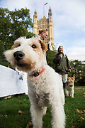 London, UK. Thursday 10th October 2013. Simon Reevell MP with his Wire Haired Fox Terrier, Maggie.MPs and their dogs competing in the Westminster Dog of the Year competition celebrates the unique bond between man and dog - and aims to promote responsible dog ownership.