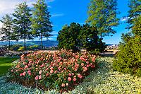 The Rose Garden (Rosengarten), Bern, Canton Bern, Switzerland