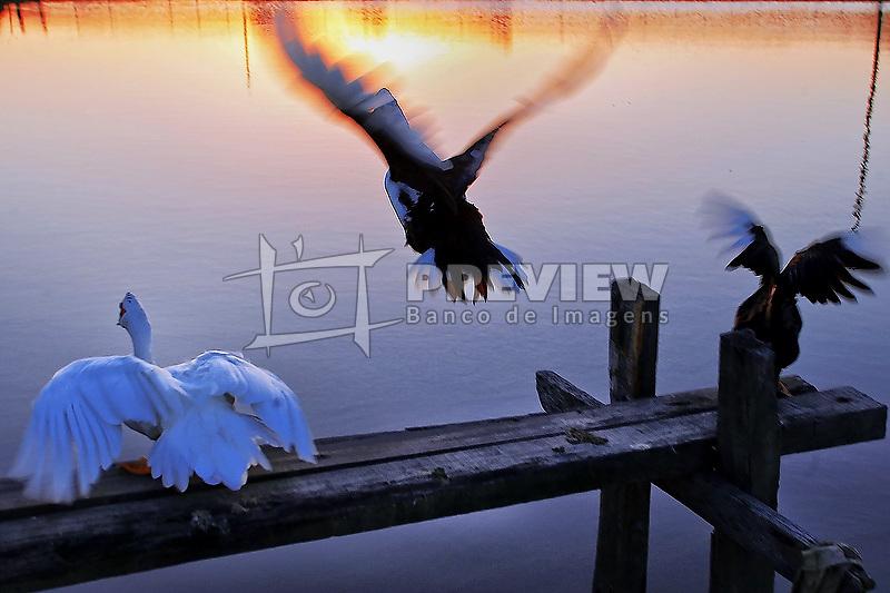 Alguns patos são vistos ao por-do-sol em um lago de Encruzilhada do Sul. FOTO: Jefferson Bernardes/Preview.com