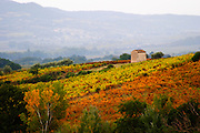 A view over the vineyards in autumn colour. Domaine Viret, Saint Maurice sur Eygues, Drôme Drome France, Europe
