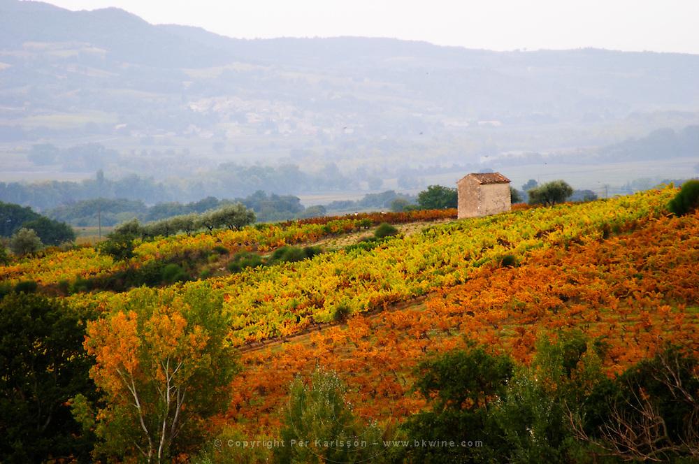 A view over the vineyards in autumn colour. Domaine Viret, Saint Maurice sur Eygues, Drôme Drome France, Europe