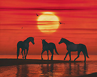 A horse stops for a moment while two others walk towards him. The evening sky colours red because it is sunset. A few seagulls fly above the sea. This attractive work can be purchased in various materials and formats. –<br /> -<br /> BUY THIS PRINT AT<br /> <br /> FINE ART AMERICA / PIXELS<br /> ENGLISH<br /> https://janke.pixels.com/featured/a-horse-on-the-beach-waiting-for-the-other-horses-jan-keteleer.html<br /> <br /> <br /> WADM / OH MY PRINTS<br /> DUTCH / FRENCH / GERMAN<br /> https://www.werkaandemuur.nl/nl/shopwerk/Een-paard-op-het-strand-wachtend-op-de-andere-paarden/801653/132?mediumId=1&size=70x55<br /> –<br /> -