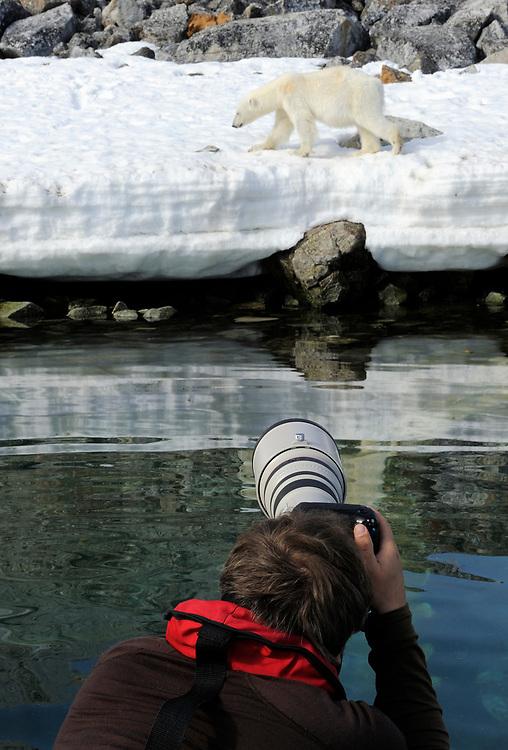 Ecotourist photographing Polar Bear, Ursus maritimus, Svalbard, Norway