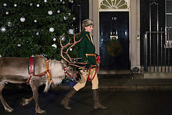 © licensed to London News Pictures. London, UK 17/12/2012. A reindeer brought to the Downing Street Christmas Party, walking outside the Number 10. Photo credit: Tolga Akmen/LNP