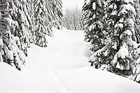 Snowshoe tracks follow a trail along trail through new snow along the Mount Tahoma Trails hut-to-hut crosscountry ski and snowshoe trail system in the Cascade Mountain Range near Mount Rainier, Washington state, USA