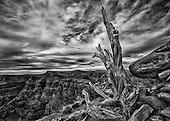 Arizona featuring the Grand Canyon and Joshua Trees