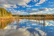 Wetland <br /> Duck Mountain Provincial Park<br /> Manitoba<br /> Canada