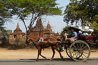 Horse carts are the traditional Bagan to see the many temples, though pickup trucks, ramshakle Toyotas are taking over.  Though the horse carts are not the fastest way of getting around, they are more fun way to see the temples, plus the canopy provides welcome shade in the blistering sun.  They are often decorated - some ponies even have plastic flowes behind their ears.