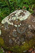 Rock with lichen, moss, Kalalau Valley,Napali Coast, Kauai, Hawaii