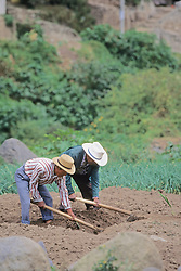 Men Cultivating Field