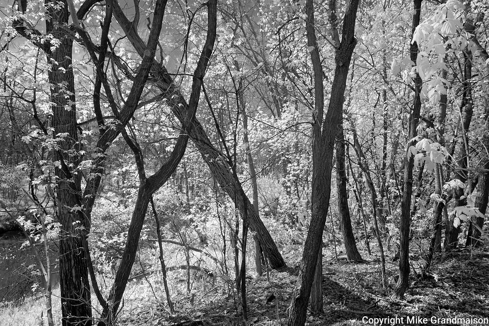 Trees along the Seine River<br />Winnipeg<br />Manitoba<br />Canada