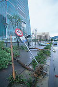Damage caused by a strong typhoon in Taipei, Taiwan.  Taipei 101, the World's tallest building is pictured in left background.