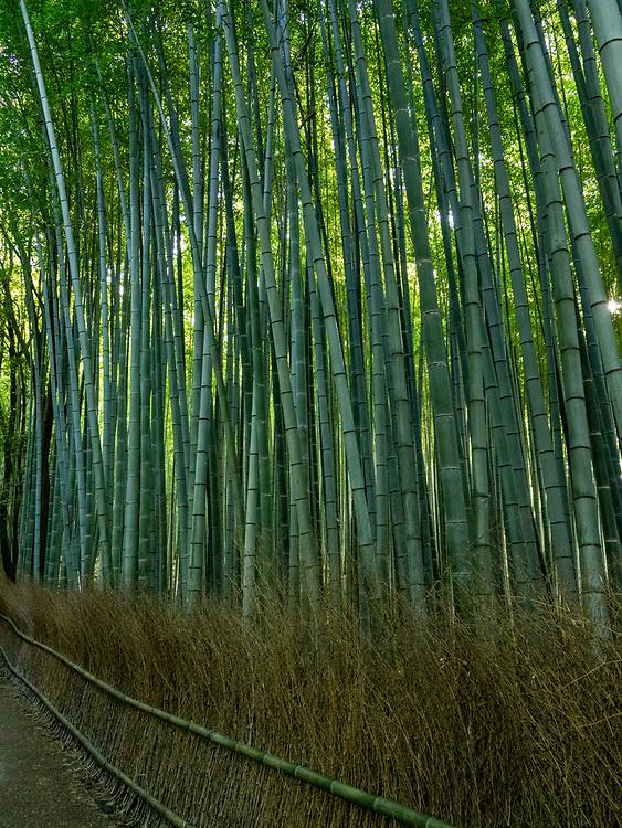 Bamboo fence in the bamboo forest, Arashiyama, Kyoto, Japan