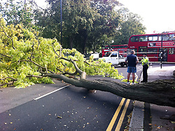 © licensed to London News Pictures. London, UK. 12/09/2011. A tree which was brought down in heavy winds on Sutton Court Road, Chiswick, London this morning (12/09/2011) closing the road and forcing traffic and transport to re route. The remains of Hurricane Katia are due to hit the UK  with gusts of up to 80mph expected to pummel the north of the uK. Photo credit: Stephen Simpson/LNP