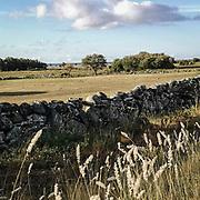 Landskap på södrasta delen av Gotland, kallad Sudret, eller Storsudret.<br /> PHOTO © Bernt Lindgren