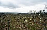 Vineyard. Chateau des Fesles. Coteaux du Layon, Anjou, Loire, France