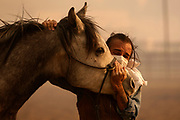 Fabio Losurdo comforts his horse, Smarty, at a ranch in Simi Valley, Calif., Wednesday, Oct. 30, 2019.