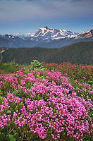 Mount Shuksan seen from Wildflowers meadows on Skyline Divide, Mount Baker Wilderness North Cascades Washington