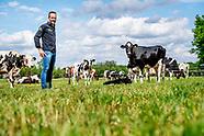 koeien dierenbscherming