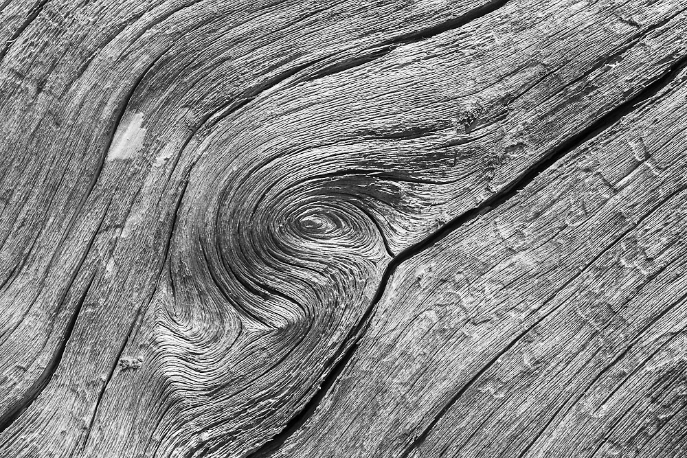 Detail of fallen tree, Snow Mountain Wilderness in Northern California. Detail and texture of fallen tree show intricate contours.