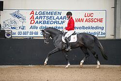 077, Panthero van de Vogelzang, Michiels Domien, BEL<br /> Hengstenkeuring BWP<br /> 3de phase - Hulsterlo - Meerdonk 2018<br /> © Hippo Foto - Dirk Caremans<br /> 15/03/2018