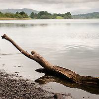 A tranquil view of a lake with a wooden branch and a duck swimming on the foreground