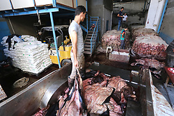 25.09.2015, Gaza, PSE, Opfertier Felle und Häute bei der Aufbereitung, im Bild Felle und Häute von den Opfertieren während des zweiten Tages des Eid al Adha oder Opferfest werden, sortiert // Palestinian leather tannery workers, salt the hides of sacrificial animals before drying them during second day of Eid al-Adha or the feast of sacrifice, in a workshop in Gaza city. Muslims across the world are celebrating the annual festival of Eid al-Adha, or the Festival of Sacrifice, which marks the end of the Hajj pilgrimage to Mecca and in commemoration of Prophet Abraham's readiness to sacrifice his son to show obedience to God, Palestine on 2015/09/25. EXPA Pictures © 2015, PhotoCredit: EXPA/ APAimages/ Mohammed Asad<br /> <br /> *****ATTENTION - for AUT, GER, SUI, ITA, POL, CRO, SRB only*****