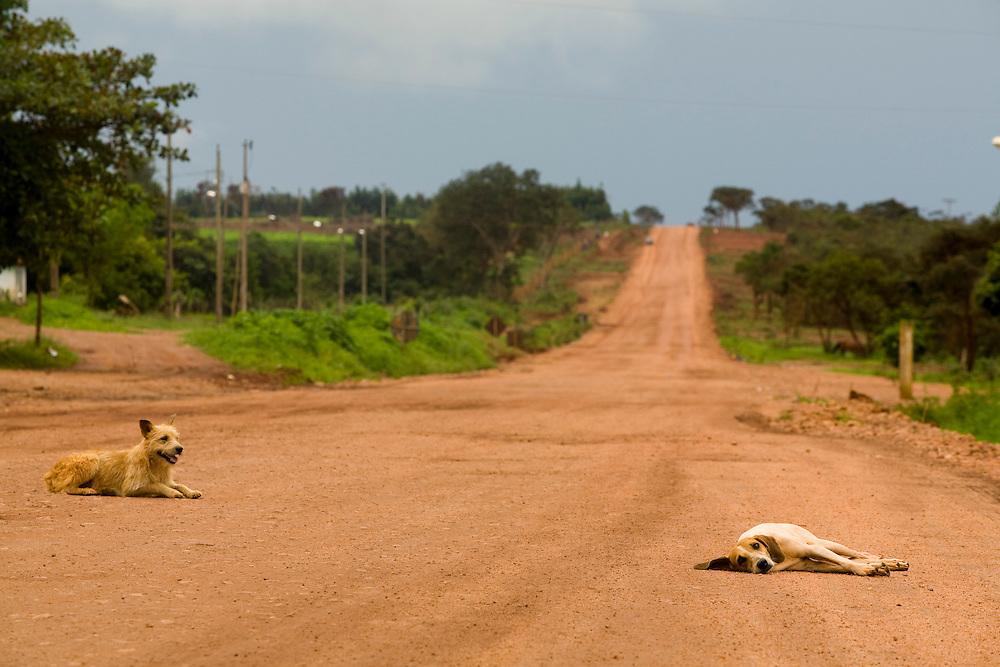 Leme do Prado_MG, Brasil...Cachorros em uma estrada de terra em Leme do Padro, Minas Gerais...The dogs on the dirty road in Leme do Padro, Minas Gerais...Foto: LEO DRUMOND / NITRO.