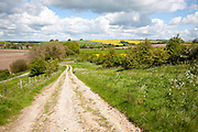 Unmade track crossing chalk landscape toward the village of East Kennet, Wiltshire, England