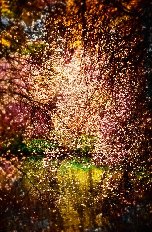 Spring flowers, Palace of Fine Arts, San Francisco, California