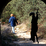 """A woman hanged a dead coyote along a much used route as a message to smugglers (a.k.a. """"coyotes""""). Shockey lives in a small eastern San Diego town overrun by undocumented immigrants since Operation Gatekeeper pushed them into the region. Please contact Todd Bigelow directly with your licensing requests. PLEASE CONTACT TODD BIGELOW DIRECTLY WITH YOUR LICENSING REQUEST. THANK YOU!"""