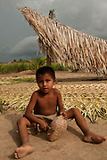 Palm Leaves for Roof Thatch<br /> Katoka Amerindian Village<br /> Rupununi<br /> GUYANA<br /> South America