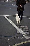 Person and small Scottie dog wait to cross a London street.