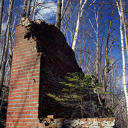 Livermore, NH..A fir tree grows on brick ruins. Paper birch trees repopulate the site of the former mill town of Livermore, NH in the White Mountains.