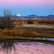 Sunset moon rise over the Bosque del Apache Wildlife Refuge, San Antonio, New Mexico