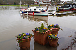 Rising waters of the Thames at Henley, Oxfordshire, surround pot plants by the riverside as heavy rains in the catchment area and saturated ground causes the river to rise to within inches of bursting its banks.. April 02 2018.
