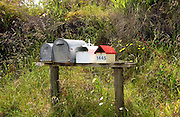 Row of mailboxes, North Island, New Zealand